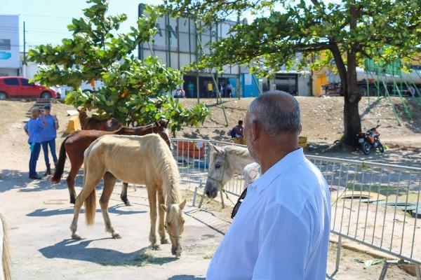 Joselito Nunes participa de ação para tratar de cavalos abandonados