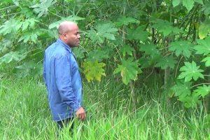 Nunes Coelho questiona Prefeitura de Taubaté sobre limpeza de terreno público abandonado
