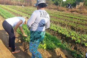 Patriciana Guimarães visita agricultores da zona Oeste de Macapá