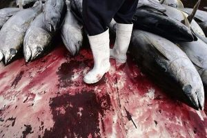 Crivella discute ordenamento da pesca de atuns no Brasil