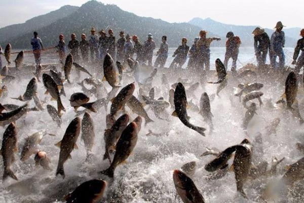 Mudança no processo de recadastramento dos pescadores